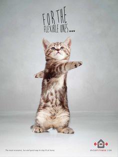 """Evdefitness propose des solutions pour faire du sport à domicile. Des prestations qui vont des conseils alimentaires, à des exercices de fitness optimisés pour la maison. Et c'est ce dernier service que l'enseigne turque a décidé d'optimiser avec la mise en scène d'adorables chatons sur petits petons. Un choix créatif signé Gode et qui à coup sûr retiendra l'attention de la cible. """"The most economic, fun and quick way to stay fit at home."""""""