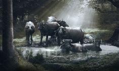 Buffalo Bath by Kailash Kumar on Indian Animals, Lake Water, Buffalo, Around The Worlds, Horses, Bath, Group, Bathroom, Bath Tub