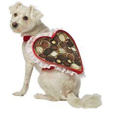 chocolate-box-dog-costumerasta-imposta-7334.jpg (1200×1200)