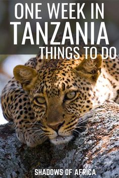 How to Spend One Week in Tanzania - Travel to Africa
