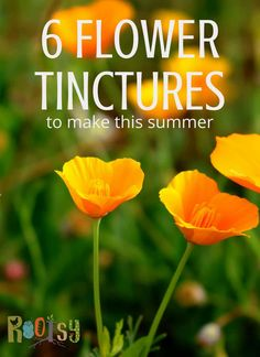 Make flower tinctures with and without alcohol this summer season and be ready to treat a range of ailments for your family in the seasons to come.