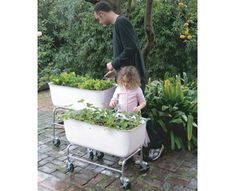 They use these at True Foods Kitchen. Foodmap Planters  Great container gardens.