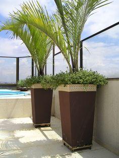 Vaso de palmeiras decorativas decorativvas