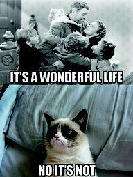 grumpy cat kills me!