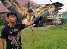 Bald Eagle, Owl, Bird, Animals, Animales, Animaux, Owls, Birds, Animal