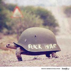 Little smart turtle.