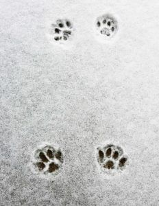 7 tips for taking care of stray or outdoor cats and dogs in the winter – PetClub-Ro Cheap Pet Insurance, Feline Leukemia, Young Animal, Pet Health, Health Care, Outdoor Cats, Dog Activities, Kittens And Puppies