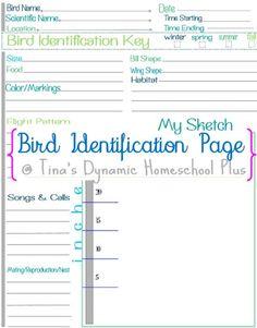 bird identificatioin page collage Bird Identification, Nature Journal, Science Experiments Kids, Nature Study, Backyard Birds, Kids Education, Charlotte Mason, Homework Club, Bird Book