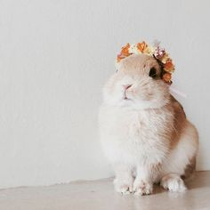lotsa buns w flower crowns on this here wedsite and if that isn't marzi aesthetic i don't know what is