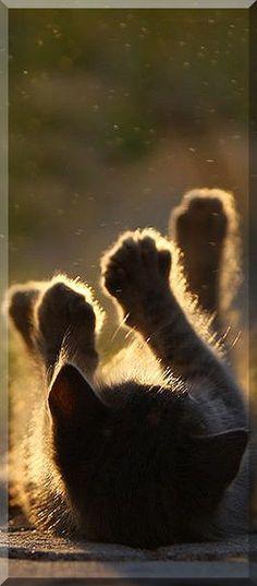 hands up........ #by serhatdemiroglu #cat cats kitty kitten animal cute funny nature fur fluffy pet