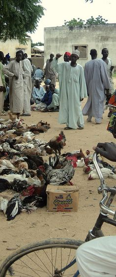 Chicken Market of the Fula people (or Fulani or Fulɓe) in Cameroon by Bernard l Hermite