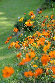 Giardino di Montagna...Parco dell'Orecchiella ©route324