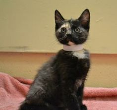Speckles is a cute little girl. She is only 3 months old and is in need of a good home.