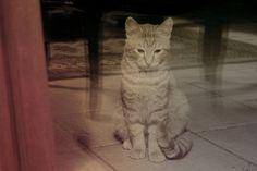 Through the window Through The Window, Photography Photos, Windows, Explore, Cats, Animals, Gatos, Animales, Animaux