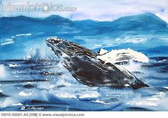 painting humpback whales watercolor - Google Search