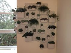 Hello Urbio! Here is a photo from our beautiful vertical garden, directly from São Paulo, Brazil! www.myurbio.com