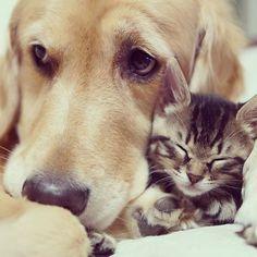 Yksinäinen koira ja hylätty kissanpentu löytävät toisensa ja niistä tulee erottamattomat ystävykset | Vivas