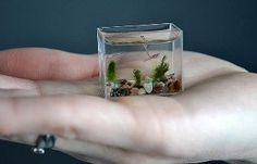Created by engineering students.This is the world's smallest working aquarium - which holds just two tea spoons of water.  The miniature wonder, which is made of glass and measures just 30mm wide by 24mm high and 14mm deep, can be held in the palm of your hand.  And it is so small there is only room for these tiny zebra fish. --