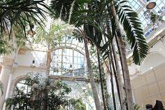 Wunderschönes Ambiente im Palmenhaus in Wien.