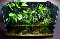 Easy To Grow Aquarium Plants   few planted ripariums - Dendroboard  (wowzers)