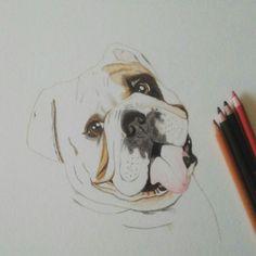 Esquiva #bulldogingles #dog #portait #colouredpencil