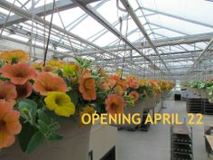 Our Retail is Opening April 2014 April 22, Retail, Spring, Plants, Planters, Sleeve, Plant, Planting, Retail Merchandising