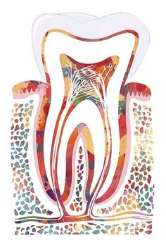 Dentist Cartoon, Dentist Art, Dental Wallpaper, Dental Business Cards, Dental Pictures, Dental Posters, Dental Anatomy, Dental Hygiene School, Dental Office Decor