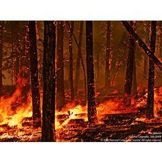 wild fire - Forces of Nature Wallpaper 127677 - Desktop Nexus Nature