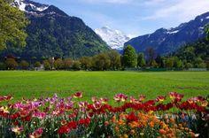 switzerland nature - Google Search