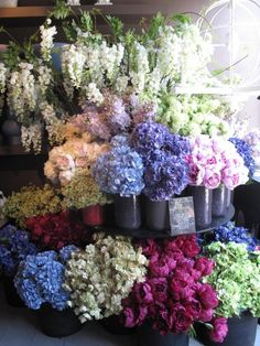 I want enough flowers that I can clip and keep fresh flowers all the time in the house without ever buying any in the store.