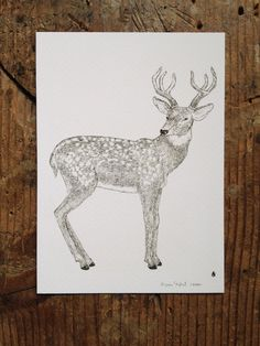 Mr. Deer Limited Edition Fine Art Print by AlyDoodlesbyAlyssa