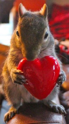 """You know I love you more than anything, right? Except for PEANUTS."""