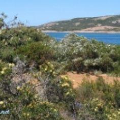 Wildblumen im Südwesten Australiens