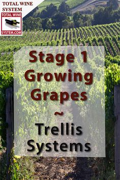 Growing grapes on a trellis is the accepted method for cultivating your vines. There are numerous styles of grape trellis's available. Check them out here. Grape Vine Pruning, Grape Vine Plant, Grape Vine Trellis, Grape Vines, Backyard Vineyard, Cold Climate Gardening, Cactus Farm, Grape Arbor, Wine Folly