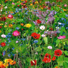 40 inspirations pour un jardin anglais Wild Flower Meadow, Meadow Flowers, Wild Flowers, Wild Flower Gardens, Fresh Flowers, Beautiful Flowers Garden, Pretty Flowers, Beautiful Gardens, Exotic Flowers