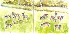 2016-05-13 8.00am Deer in the field from my window