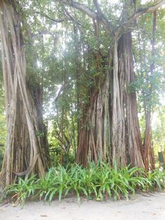 Banyan Tree, Kuramathi, Maldives