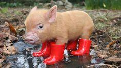 gris med røde gummistøvler - Google-søgning