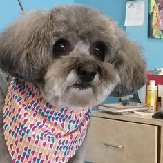 Nellie #wagsmytail #doggroomer #tucsondoggrooming A well groomed dog is a well loved dog! Call us today to schedule your dog grooming appointment 520-744-7040