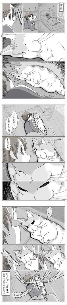 Cat Comics, Interesting Animals, Cute Creatures, Crazy Cats, Neko, Animal Crossing, Cute Animals, Cartoon, Manga
