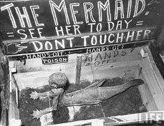 the mermaid / circus side-show attraction