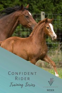 Confident Rider Training Series LIVE >> Confident Rider - mindset, movement and nervous system awareness for equestrians Horseback Riding Lessons, Emotional Resilience, Horse Riding Tips, Training Tips, Nervous System, Confident, Equestrian, Mindset, Learning