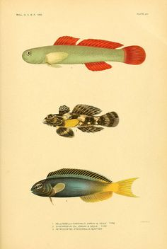 The fishes of Samoa by BioDivLibrary, via Flickr