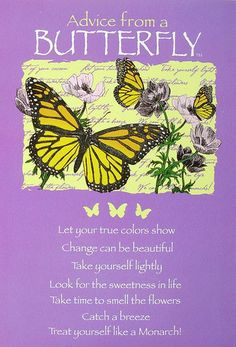 Leanin' Tree Ilan Shamir Advice from A Butterfly Encouragement Greeting Card New | eBay