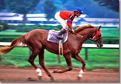 Alydar (1975 to 1990) was an American Thoroughbred race horse who was most famous for finishing a close second to Affirmed in all three races of the Triple Crown, a feat not achieved before or repeated since. Although overshadowed in some ways by Affirmed in his racing career, Alydar was very prolific as a stallion. His offspring include Alysheba, Turkoman, Strike the Gold, and Criminal Type. He is also the broodmare sire of Cat Thief, Anees, Ajina, Gio Ponti, and Lure.