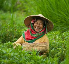 Cueilleuse by Alain Bachellier on 500px - A Balinese woman picking flowers for offerings in a field near Klungkung