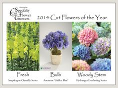 ASCFG Cut Flowers of the Year