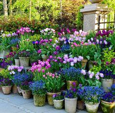 60 Small Flower Pot for Spring Garden Decor - Alles über den Garten Autumn Garden, Spring Garden, Beautiful Flowers Garden, Beautiful Gardens, Container Plants, Container Gardening, Container Design, Flower Gardening, Flowers In Containers