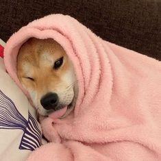 Imagen de puppy, animals, and dogs