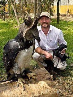 Captive Harpy Eagle